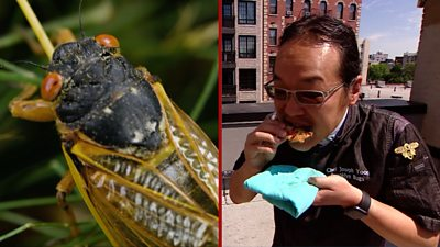 Cicadas: The US chef cookingup the insect 'flavour bombs'