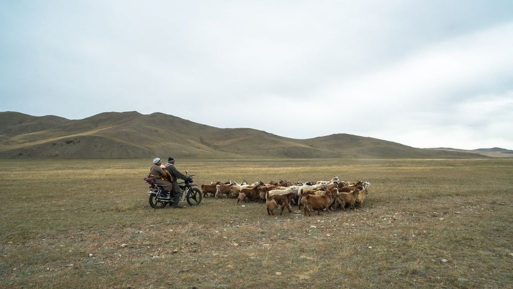 ADB Improving Livestock Production Systems in Central Mongolia